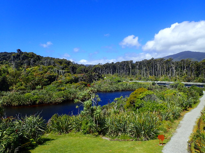 Haast Swamp Forest Walk